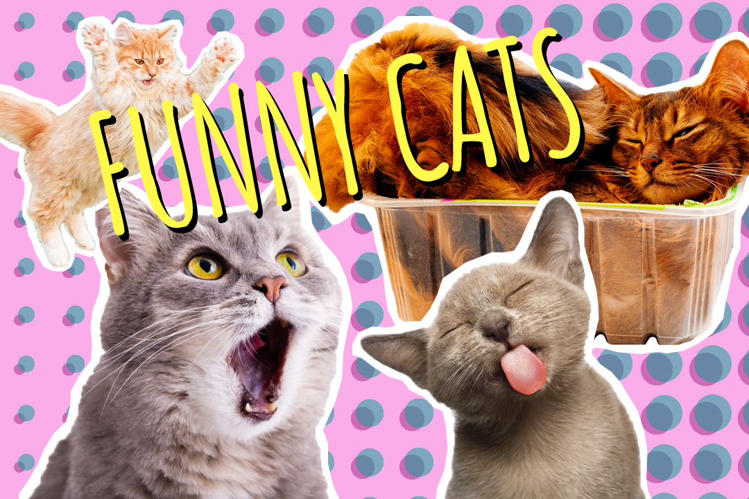 cats_video featured image
