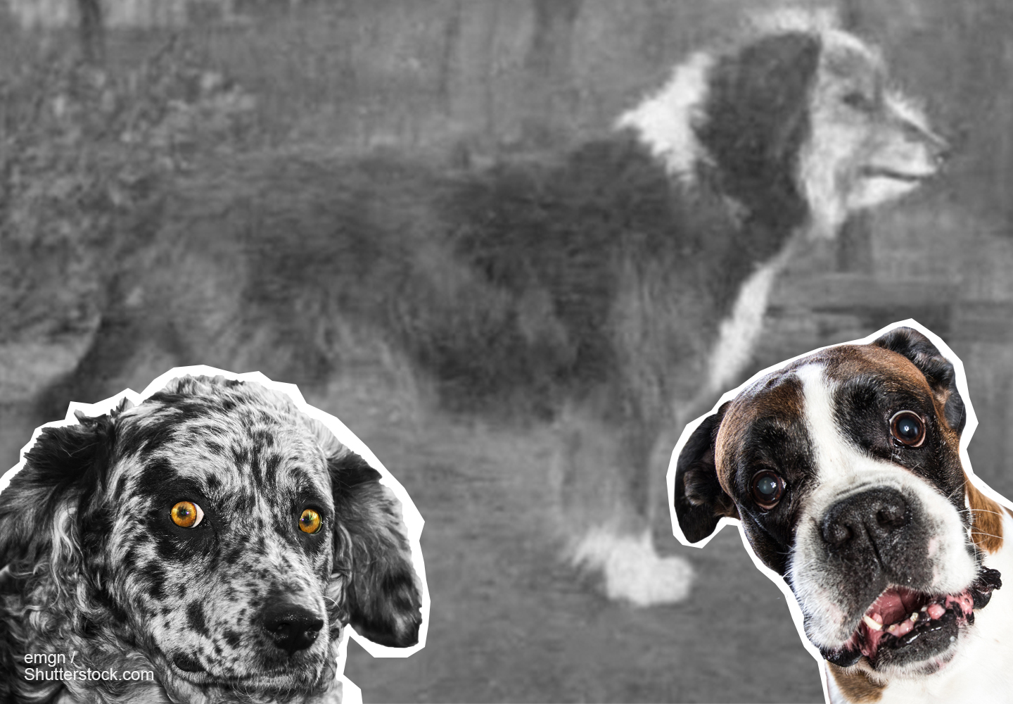 dog breeds featured image